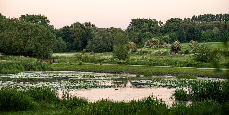 Stilla vatten i Höje å, med gräs, buskar och träd, en sommarkväll där solen färgar himmelen svagt rosa.