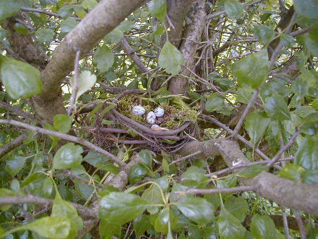 Fyra ägg i ett fågelbo bland grenar och gröna blad