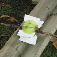 Ett äpple med skovlar av kartongbitar bildar ett minikraftverk
